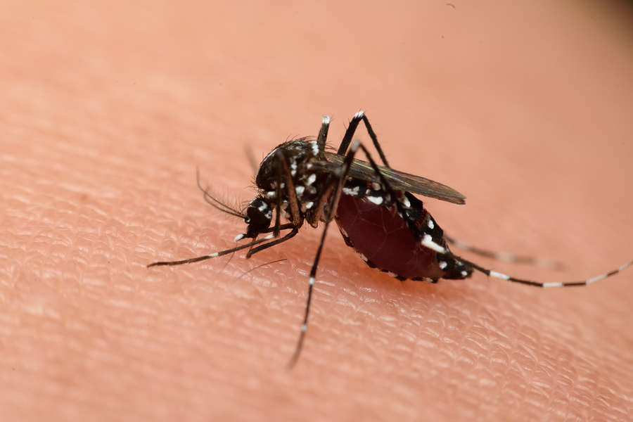 Life and Health-Does Should You Be Worried About the Zika Virus